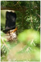 Mother blackbird III by Malgorzata-Skibinska