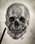 Skull by WolfOfHorror