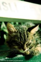 Kitten Sleeps.) by MR-Crictical