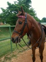 Henry in a full bridle by disengagefrmreality