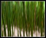 Bamboo Delight by aFeinPhoto-com