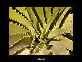 - Agave - by penelopew