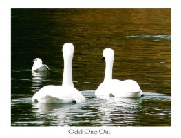 Odd One Out by GeminiArtNStock