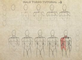 Male Torso Tutorial. by mkw-no-ossan