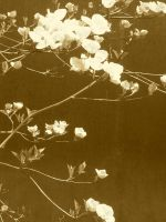 sepia by mariaell