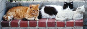 A photo of three cats by Reptangle