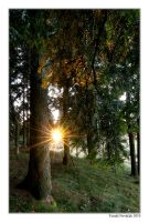 Sunset in the woods by novy1986