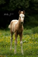 Small Baby by EliseJ-Photographie