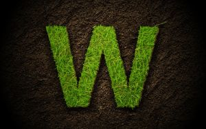 grass text by wbar