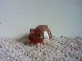 Brown boy lps guinea pig by ButchxButtercup1996