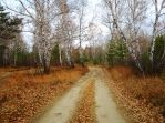 Road in autumn forest1 by Tumana-stock