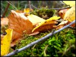 Moss and Leaves by aelthwyn
