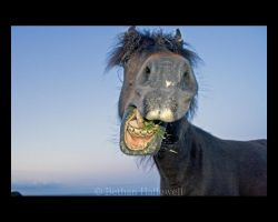 Funny Face by BethHallewell