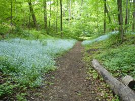 Path in the Woods by Kiplinger