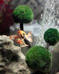 Crayfishes Can Even Climb Trees Under Water by Redsterfish