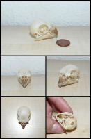 Cockatiel Skull by CabinetCuriosities