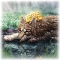 Lost Wolf by SheltieWolf
