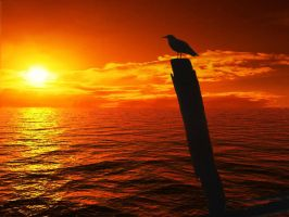 Seagull Sunset 1 by esheafer