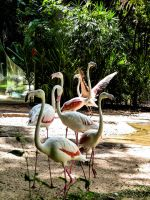 Bird Stock Flamengo 5 by StarsColdNight