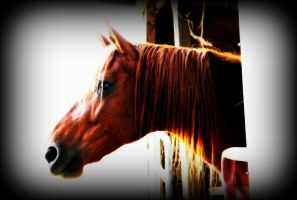 Hope In the Stable by toddcarter