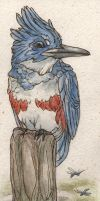 Belted Kingfisher Birdmark by teriathanin