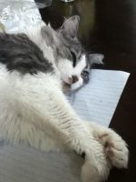 Kitty On the Homework by Winter-Flight