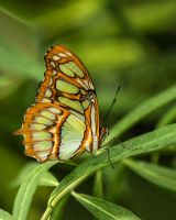 Butterfly Stock 26 by NellyGraceNG