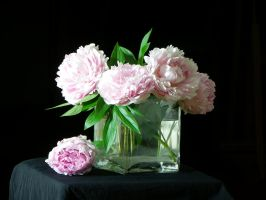 Peonies by Fototempelziege