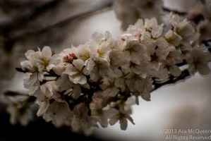 Blossoms Begin by UltraSonicUSA