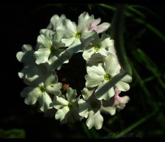 A Chain Of Flowers... by FeliFee