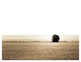 Generic Lonely Tree Shot by ThePpeGFX