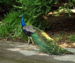 Philadelphia Zoo 3 by Dracoart-Stock