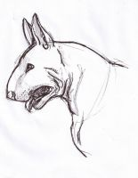 Bull Terrier by flux95