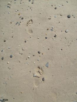 Traces de pieds by Allysss