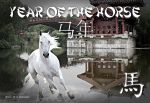 Year of the Horse by cazcastalla