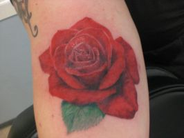 Red Rose by MSVickery