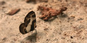 Lonely Butterfly by ixan27