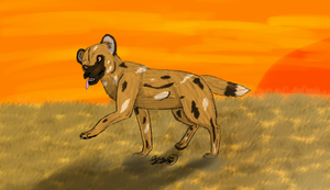 African Wild Dog by Snowshka
