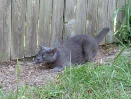 Cats 008 by Moose-Stock