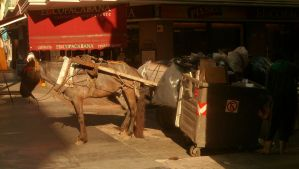 Horse for garbage / Montevideo by WillemFred