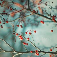 Winter Berries by SweetPeaPhototc