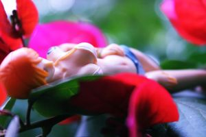 Through Flowers and Shames by Martim