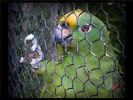 Caged. by Crash-Photographs
