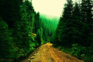 Forest Road by TM-Photos