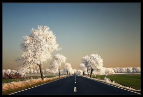 Dreams Way by Sesjusz