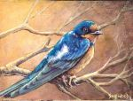 'Barn Swallow' by Gallery-of-Art