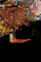 Autumn light by BecciES