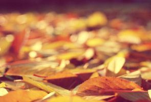 Autumn leaves by stevehood1