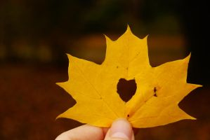 Fall Love by No-parachutes-here