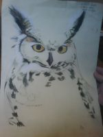 Owl in pastels by VIZEarts